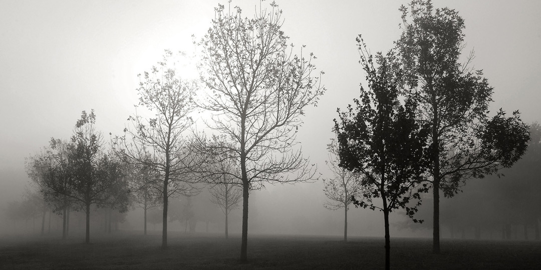 Fog Through The Trees, fine art photograph by Dan Cleary of Cleary Creative Photography in Dayton Ohio