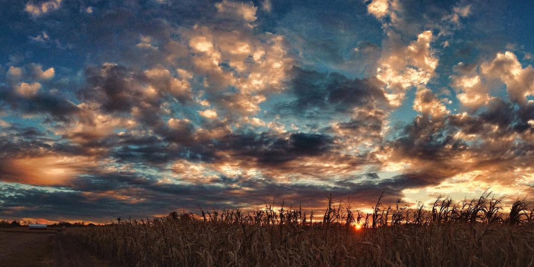 pringboro Ohio sunset with corn field
